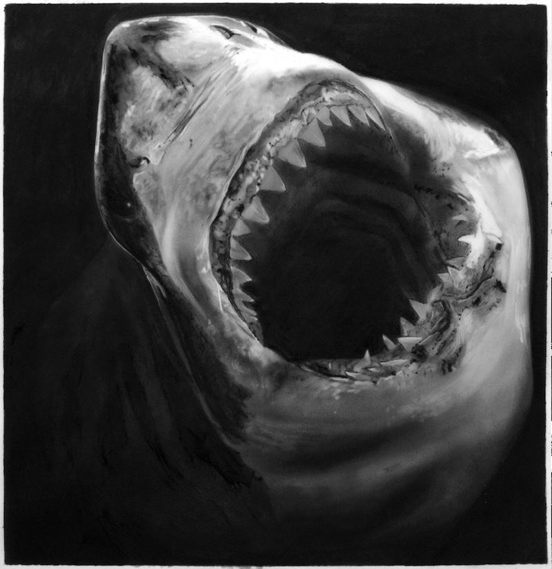 Study for Shark