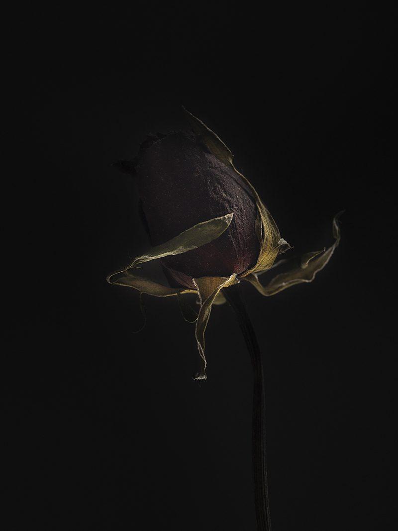 Flower dry 8913